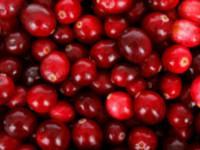 Cranberryprotein