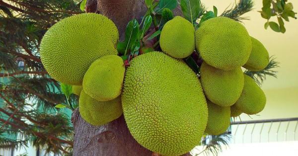 jackfruit59ef3e0f49f39